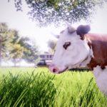 Real Farm_Screenshot_Cow Field 4